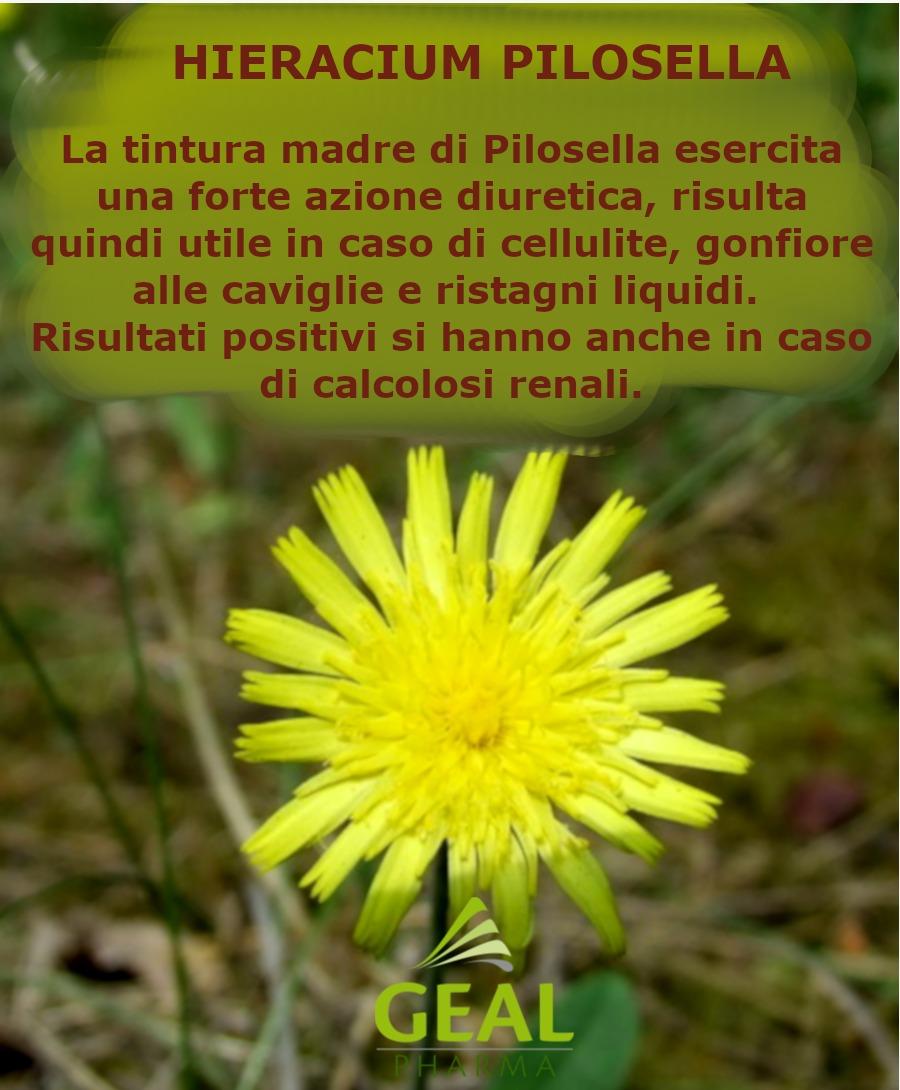 020-pilosella&D20000